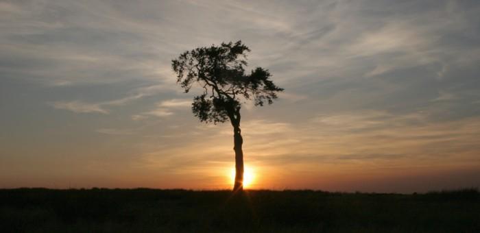 Lonely Tree Copy